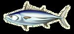 Skipjack Tuna by TokoTime