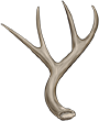Antler by TokoTime