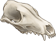 Fox Skull by TokoTime