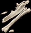 Large Bone Fragments by TokoTime