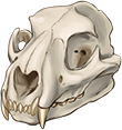 Mountain Lion Skull by TokoTime