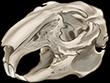 Rabbit Skull by TokoTime