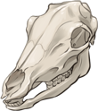 Caribou Skull by TokoTime