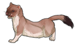 Stoat by TokoTime