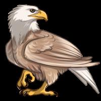 Leucistic Eagle by TokoTime