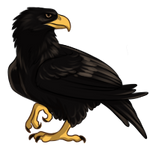 Black Eagle by TokoTime