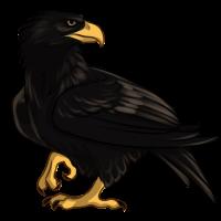 Black Eagle by TokoTime
