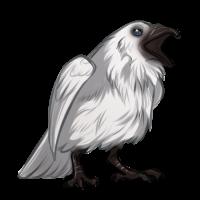 Leucistic Raven by TokoTime