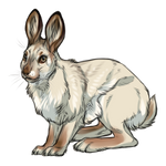 Snowshoe Hare Spring Coat by TokoTime