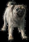 Pug Companion- Fawn by TokoTime