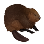 Brown Beaver Companion by TokoTime