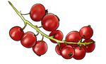 Red Currant by TokoTime