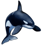 Orca by TokoTime