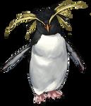 Rockhopper Penguin by TokoTime