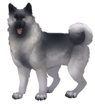 Norwegian Elkhound - Silver by TokoTime