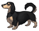 Dachshund - Black and Cream by TokoTime