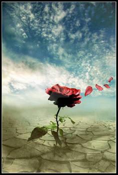 A rose in the wind