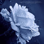 Bloom by FrozenStarRo
