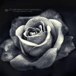 Bloom III