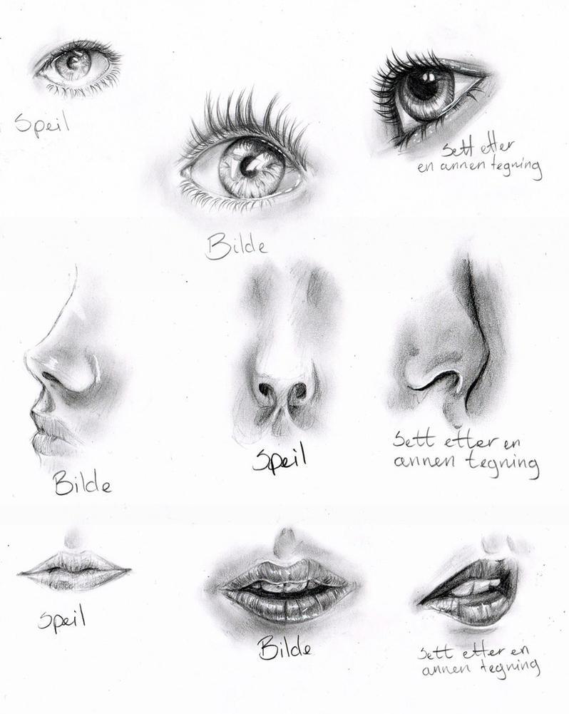 Anatomy Practice By Nor Renee On Deviantart