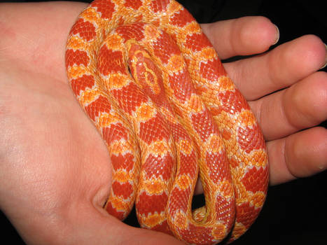 My Baby Pet at 2006 in palm