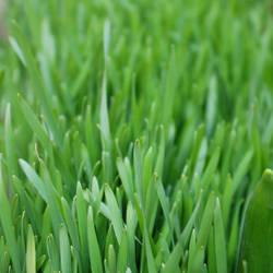 City Grass