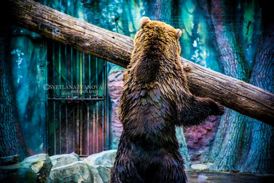 Bear 7 by Svetlanadeviant