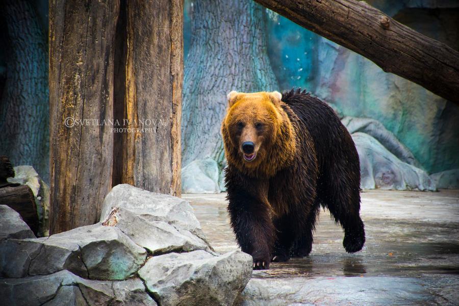 Bear 11 by Svetlanadeviant