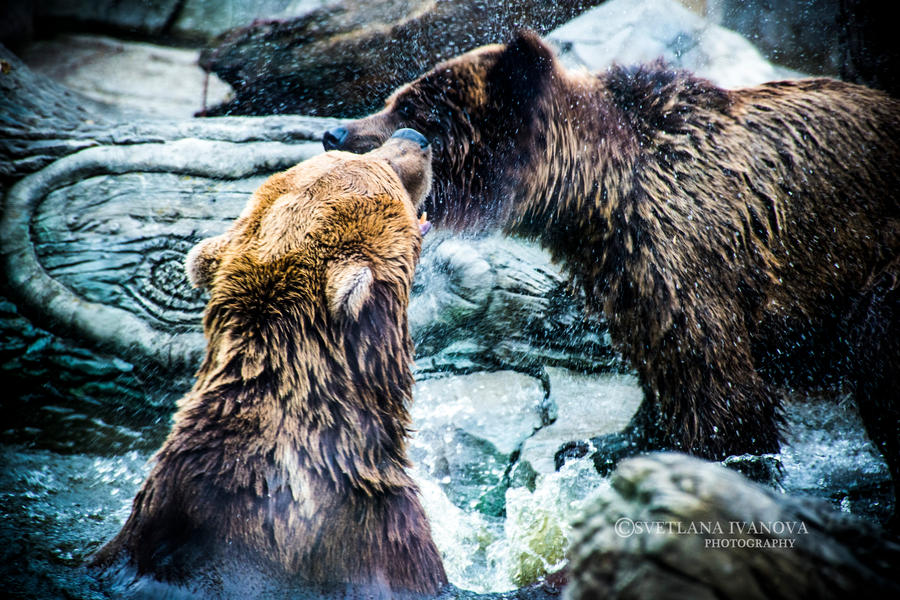 Bears by Svetlanadeviant