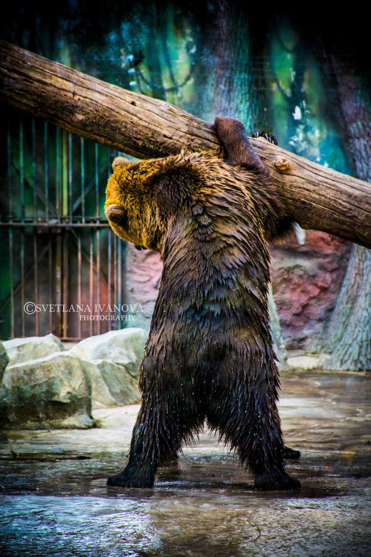 Bear 8 by Svetlanadeviant