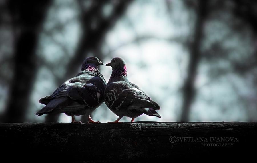 Pigeons by Svetlanadeviant
