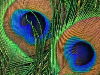 feathers by razorquick