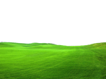 Green Grass PNG FILE - Use freely
