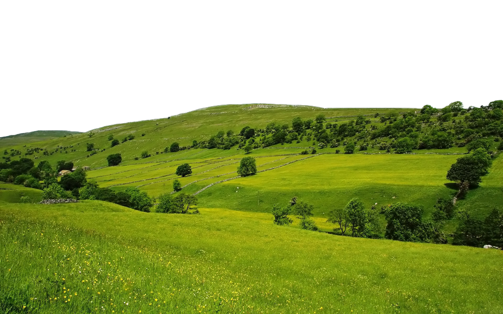 Green Nature PNG FILE -use freely by TheArtist100