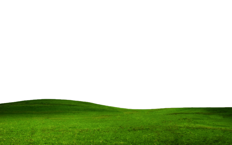 Grass On Transparent Background Pictures