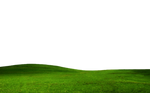 GRASS PNG FILE -TRANSPARENT
