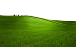 GREEN GRASS PNG - USE ANYWHERE (TRANSPARENT)