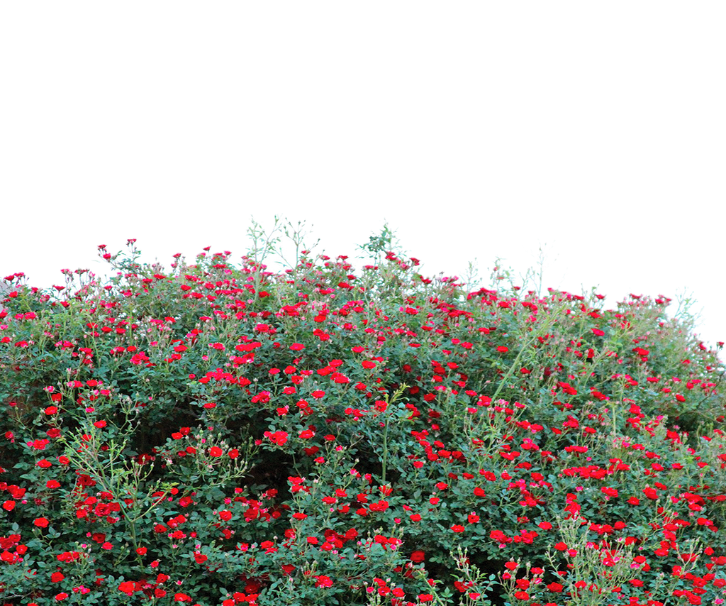 FLOWER GARDEN PNG TRANSPARENT - USE FREE by TheArtist100 ...