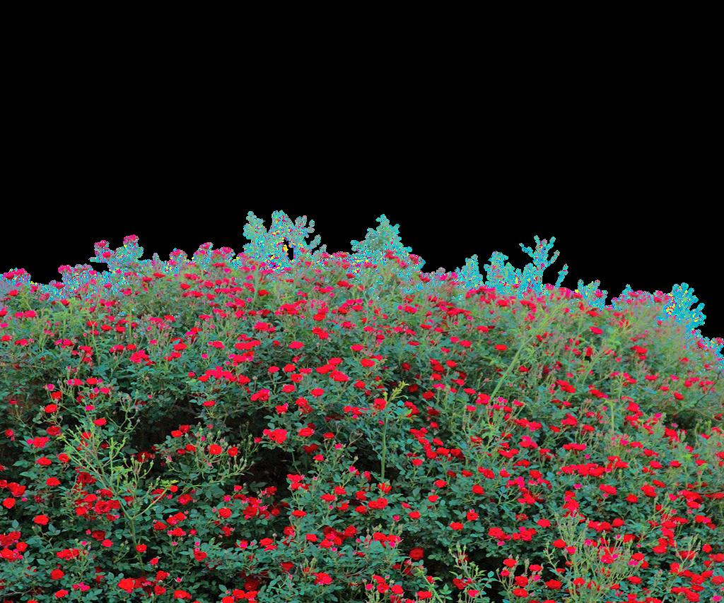 Beautiful garden wallpaper - Flower Garden Png Transparent Use Free By Theartist100
