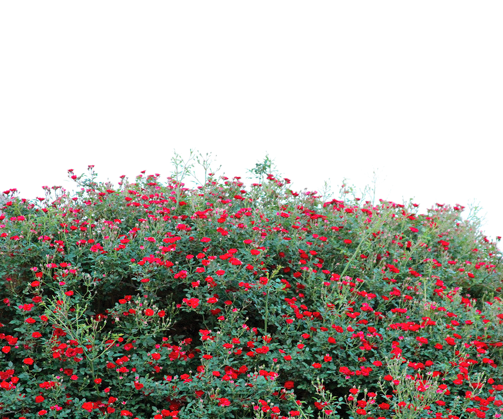 Flower Garden Png Transparent Use Free By Theartist100 On Deviantart
