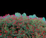 FLOWER GARDEN PNG TRANSPARENT - USE FREE