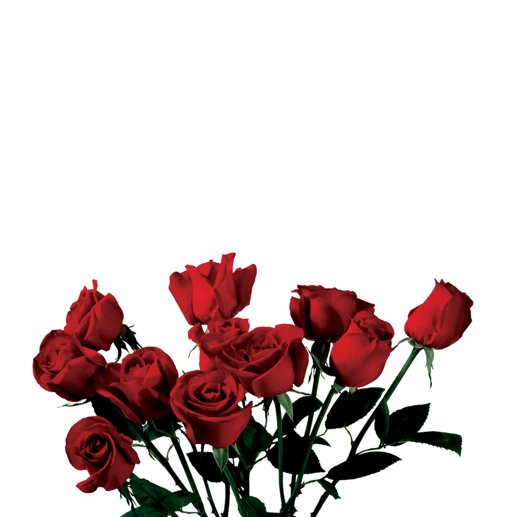 ROSE PNG TRANSPARENT -USE ANYWHERE by TheArtist100 on DeviantArt for Transparent Png Images Roses  155sfw