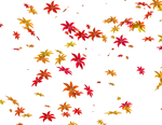 falling flowers png transparent