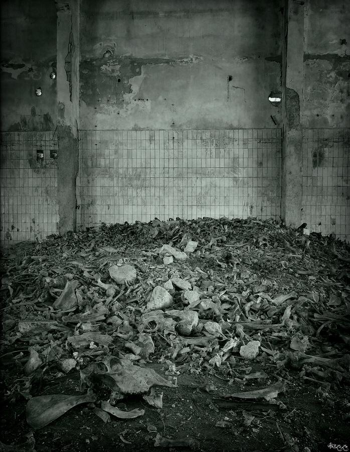 bones by Haszczu