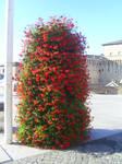Red-Flower-Bush