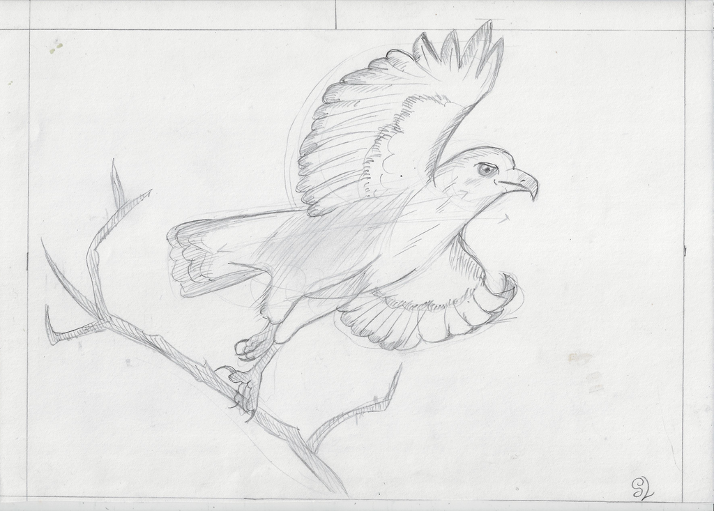 Hawk Practice by Marsupialbandit
