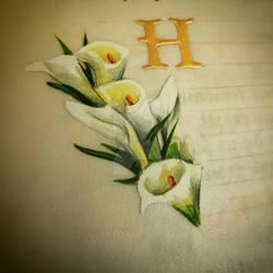 Arum lilies miniature