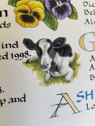 Calf illustration