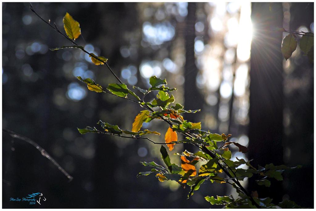 Autumn sunlight by Desirestar