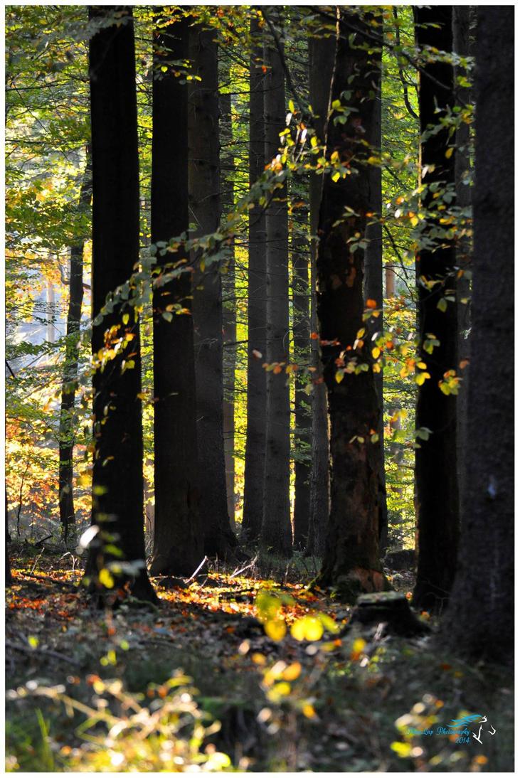 Beech grove by Desirestar